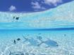 Sfondo: Maldives Underwater