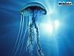 Sfondo: Medusa