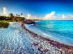 Sfondo: Playa del carmen