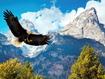 Sfondo: Aquila in volo