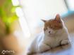 Sfondo: My Cat