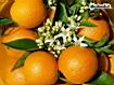 Sfondo: Oranges