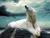 Sfondo: Orso Bianco