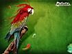 Sfondo: Painting Parrot