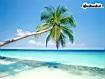 Sfondo: Palma tropicale