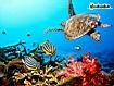 Sfondo: Pesci e coralli