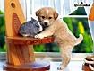Sfondo: Pets