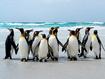 Sfondo: Gruppo di pinguini