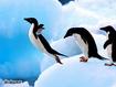 Sfondo: Pinguini