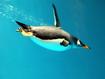 Sfondo: Pinguino