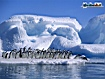Sfondo: Pinguni