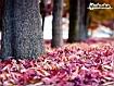 Sfondo: Purple Leaves