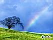 Sfondo: Rainbow