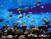 Sfondo: Real Aquarium