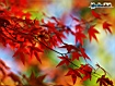 Sfondo: Red Leaves