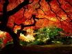 Sfondo: Red Tree