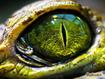 Sfondo: Reptile Eye