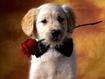 Sfondo: Romantic Dog