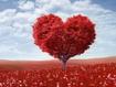 Sfondo: San Valentino