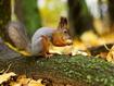 Sfondo: Squirrel