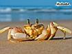 Sfondo: Scrab