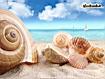 Sfondo: Shells
