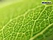 Sfondo: Skin Leaves