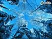 Sfondo: Sky Winter Trees