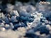 Sfondo: Fiocco di neve