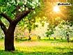Sfondo: Sole tra le foglie