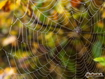 Sfondo: Spider Web