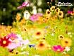 Sfondo: Spring Flowers