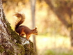 Sfondo: Squirrel Jump