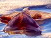 Sfondo: Stella sulla sabbia