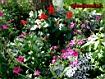 Sfondo: Giardino in fiore