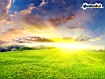 Sun On Field