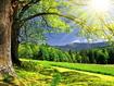 Sfondo: Sunny Summer Day