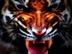 Sfondo: Tiger Face