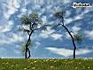 Sfondo: Arco di alberi