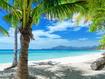 Sfondo: Palme sulla riva