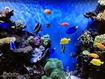 Sfondo: Tropical Fish