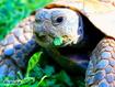Sfondo: Turtle