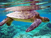 Sfondo: Turtle Underwater