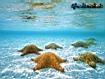 Sfondo: Undersea