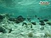 Sfondo: Pesci tropicali