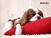 Sfondo: Vita da cani