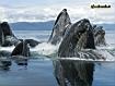 Sfondo: Balene