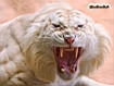 Sfondo: White Tiger