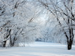 Sfondo: White Trees