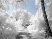 Sfondo: Winter Landscape